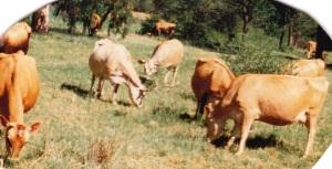 Prov-animalsHerd1