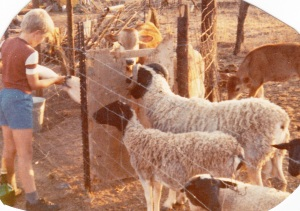 Nicholas Simkin feeding calves