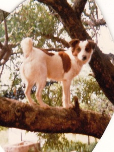Sam in tree