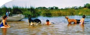 SwampSwim
