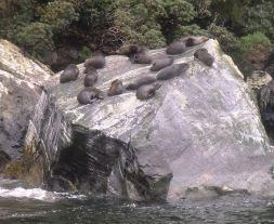Milford seals