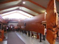 Kauri museum 5